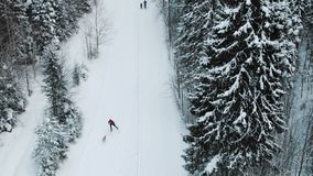 Aerial view of amateur male person cross-country skiing in winter forest landscape with dog stock footage