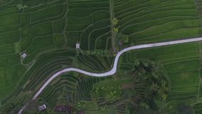 Aerial view: amazing rice fields in Bali stock footage