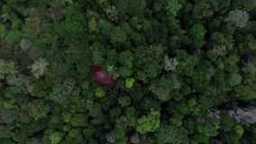 Aerial view of Amazon forest, Brazil stock video