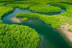 Aerial view of Amazon rainforest in Brazil, South America. Green forest. Bird`s-eye view