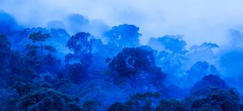 Aerial view of ancient tropical forest in blue misty, art of shape of wild trees on rainy morning royalty free stock photos