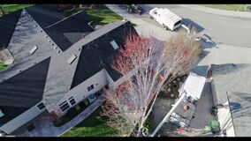Aerial view of an arborist working to remove a maple tree