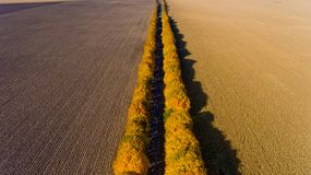 Aerial view of the autumn field road. Aerial view. Aerial view of the autumn field road stock images