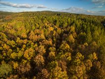 Aerial view of a forest Royalty Free Stock Photo