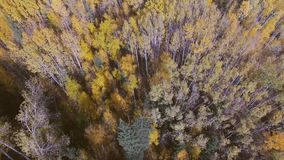 Aerial view of autumn forest stock video