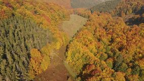 Aerial View of the Autumn Forest. Carpathian Mountains. Autumn Forest. Orange Hill in the Carpathian Mountains stock footage