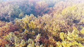 Aerial view of autumn forest covered with fog, colourful deciduous trees. Aerial view of autumn forest covered with fog, plenty trees with yellow and orange stock video footage