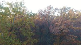 Aerial view of autumn forest covered with fog, upward movement. Trees with yellow and orange leaves stock video footage
