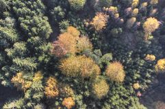 Aerial view of autumn forest Royalty Free Stock Photography