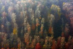 Aerial view of autumn forest Stock Photography