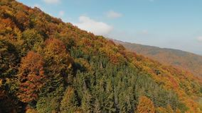Aerial View of the Autumn Forest. Orange Hill in the Carpathian Mountains. Aerial View of the Autumn Forest. Carpathian Mountains. Autumn Forest. Orange Hill in stock footage