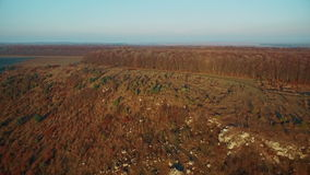 Aerial view of autumn forest at sunset stock video footage