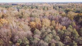 Aerial view of the autumn forests