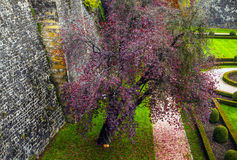 Aerial view of autumn park in district of Luxembourg City Royalty Free Stock Photos