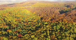 Aerial view of autumn pine forest with yellow and green trees. Aerial view of autumn pine forest with yellow trees stock video