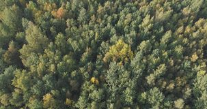 Aerial view of autumn trees in forest in september Stock Photography