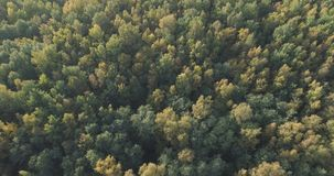 Aerial view of autumn trees in forest in september Royalty Free Stock Photo