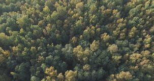 Aerial view of autumn trees in forest in september Stock Image