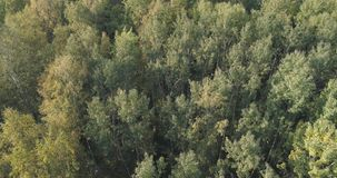 Aerial view of autumn trees in forest in september Stock Images