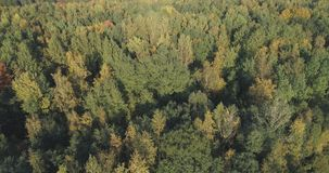 Aerial view of autumn trees in forest in september Royalty Free Stock Image