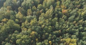 Aerial view of autumn trees in forest in september Royalty Free Stock Photography