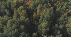 Aerial view of autumn trees in forest in september Royalty Free Stock Photos