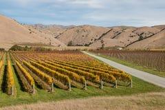Aerial view of autumn vineyards Stock Photo