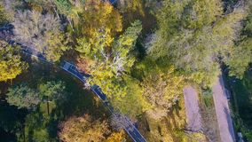 Aerial view of autumnal nature scenery in city park stock video