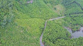 Aerial View Banana and Tree Plantations at Road along Lake. Aerial view banana and paper tree plantations on tropical hill slopes by modern road along lake stock footage