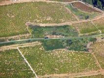 Aerial vinyard Stock Image