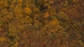 Aerial view at the autumn forest stock footage