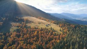 Aerial View of beautiful autumn mountain landscape. Aerial View over beautiful autumn mountain landscape. Yellow pasture with lonley houses among orange pine Royalty Free Stock Images