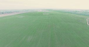 Aerial View beautiful autumn sown fields of wheat in the Ukrainian land 4k stock video footage
