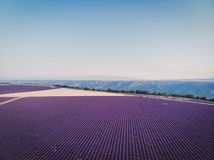 Aerial view of beautiful cultivated lavender field and mountains in provence. France stock photos