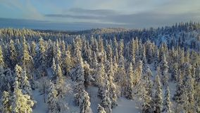 Aerial view of a beautiful Lapland winter landscape. Valtavaara on sunset - Oulanka National Park. Wonderful snow-capped trees on sunset stock footage