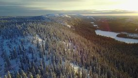 Aerial view of a beautiful Lapland winter landscape. Valtavaara on sunset - Oulanka National Park. Wonderful snow-capped trees on sunset stock video