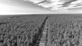 Aerial view of beautiful road across the forest.  Royalty Free Stock Image