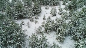 Aerial view of winter snowy forest stock video