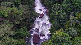 River stream in the jungle. Royalty Free Stock Photo