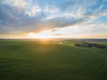 Aerial view of a beautiful sunset over green corn fields - agricultural fields Royalty Free Stock Images