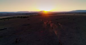 Aerial view of beautiful wild horses running in the field at sunrise, video