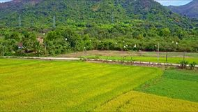 Aerial view birds fly over concrete road among rice fields. Aerial view white birds fly over concrete road among green rice fields against high forestry stock footage