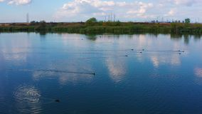 Aerial View Of Birds Fly Over A Lake. 4k stock footage
