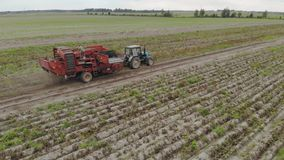 Harvesting of root crops trailed potato harvester with sorter on Board stock footage