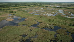 Aerial view of bog lands with white herons nesting place stock footage