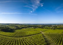 Aerial view, Bordeaux vineyard, landscape vineyard south west of france stock photography