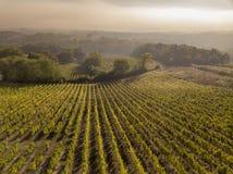 Aerial view Bordeaux Vineyard at sunrise, Entre deux mers, Langoiran, Gironde. France stock photos