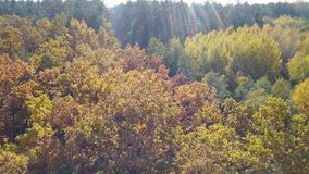 Aerial view on branches in the autumn yellow foliage stock video footage