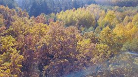 Aerial view on branches in the autumn yellow foliage stock footage