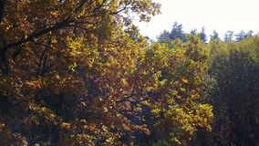 Aerial view on branches in the autumn yellow foliage with road stock video footage